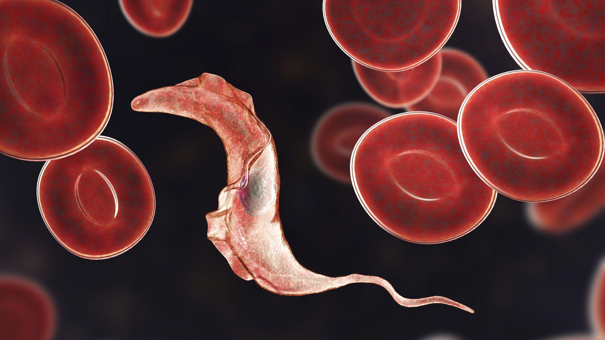 humán papillomavírus fertőzés halálozási aránya