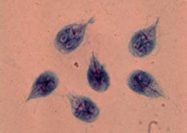 akár férgek kezelésére anaerob baktériumok meghatározása