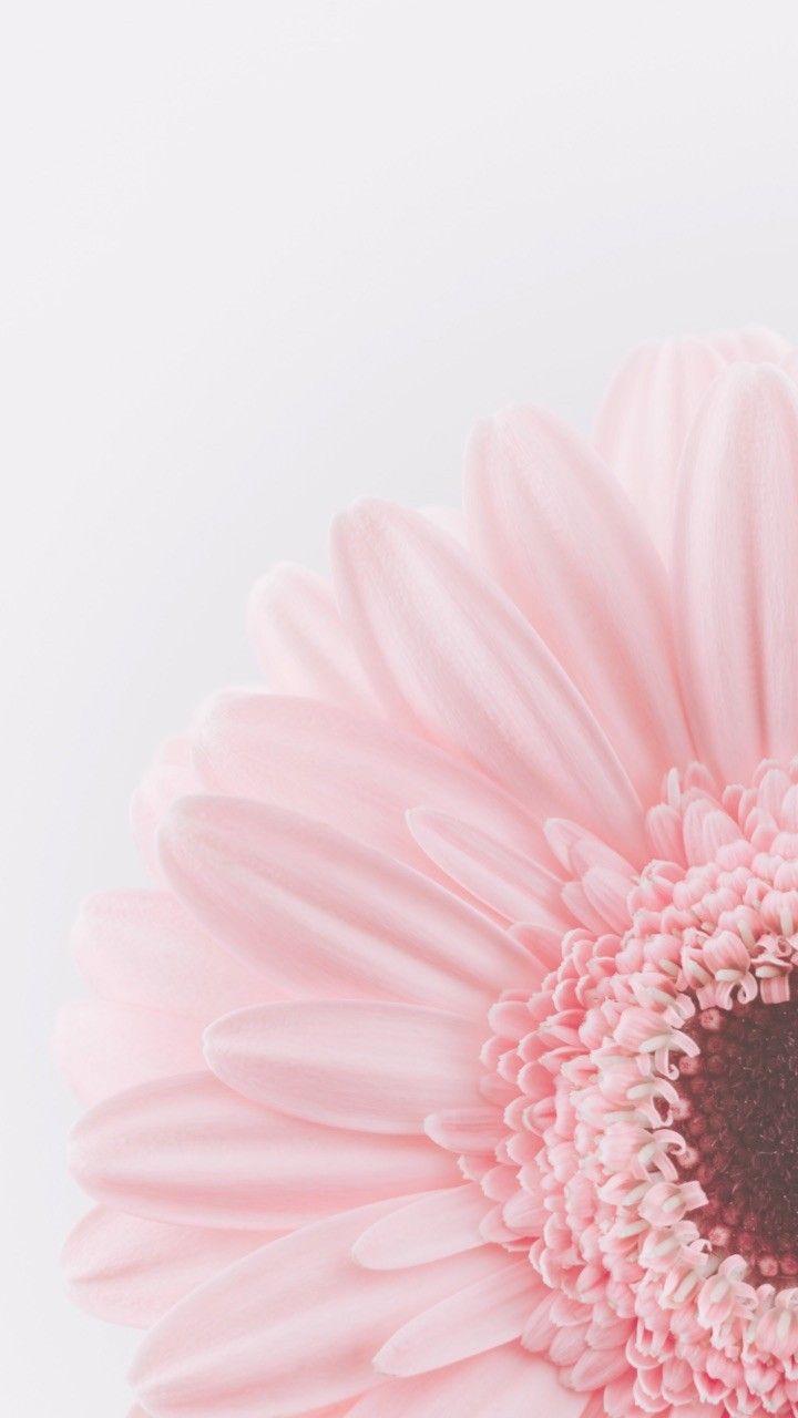 mellrák mx szemölcsök a végbélnyílás diagnózisában