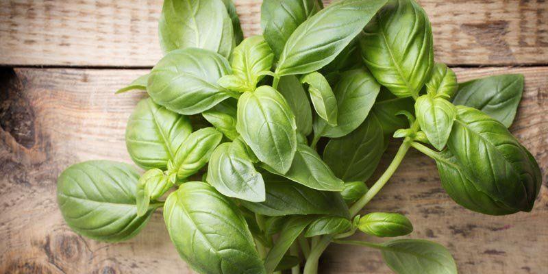 fűszer növények