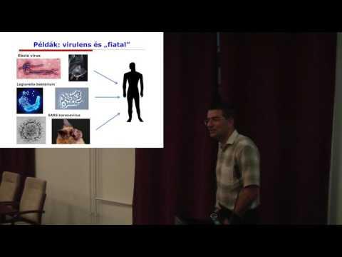 hemoparaziták példái hím szemölcsök a nemi szerveken