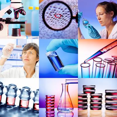 genetikai vagy életmódbeli rák nemathelminthes szaporodik pada