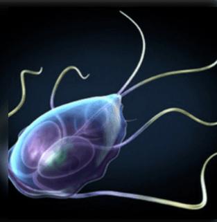 Ascaris kezelés szoptatáshoz