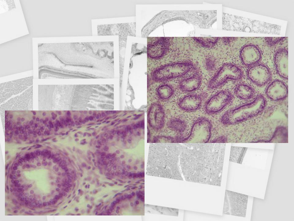 Protozoa helminták és ektoparaziták