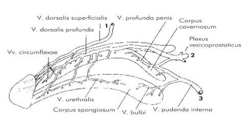urethralis condyloma a férfiak kezelésében