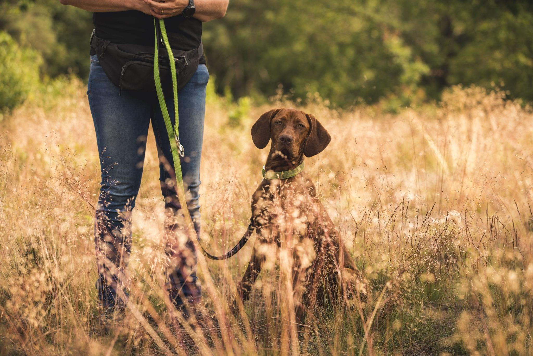 tünetek giardia bij honden genitális szemölcsök nőknél intim helyeken