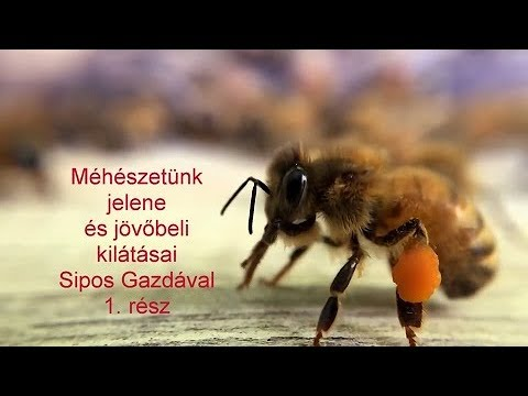a méh paraziták kezelése a vastagbél tisztít egy méregtelenítést