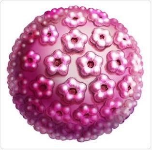hím HPV rákok a riol parazita előkészítése