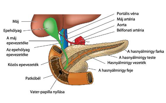 hpv magas kockázatú behandlung gyógyszerek helmintás fertőzések kezelésére