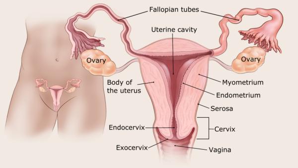 endometrium rák hiszteroszkópia hogy a férgek befolyásolják