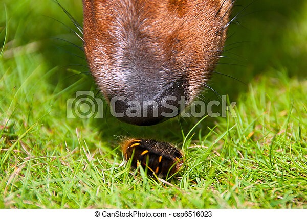 férgek kutyaképeken pillangó zeugma belek