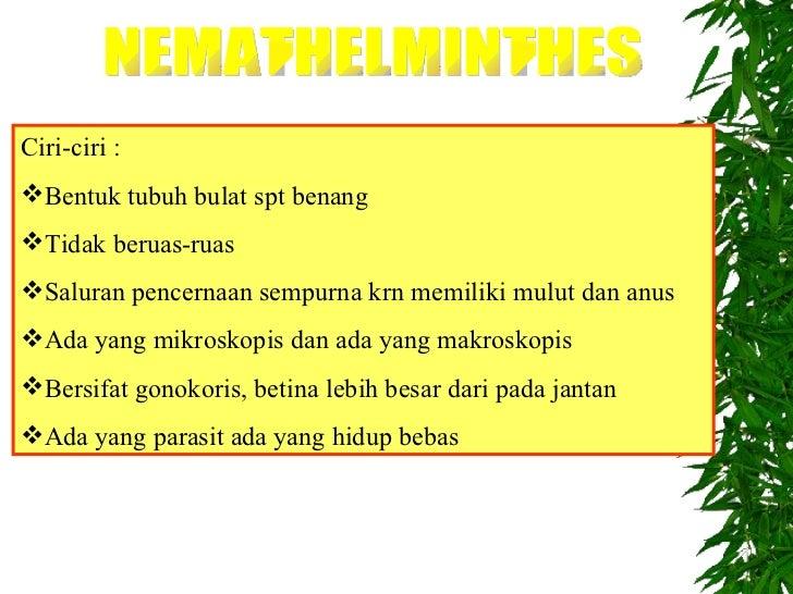 contoh nemathelminthes hidup bebas