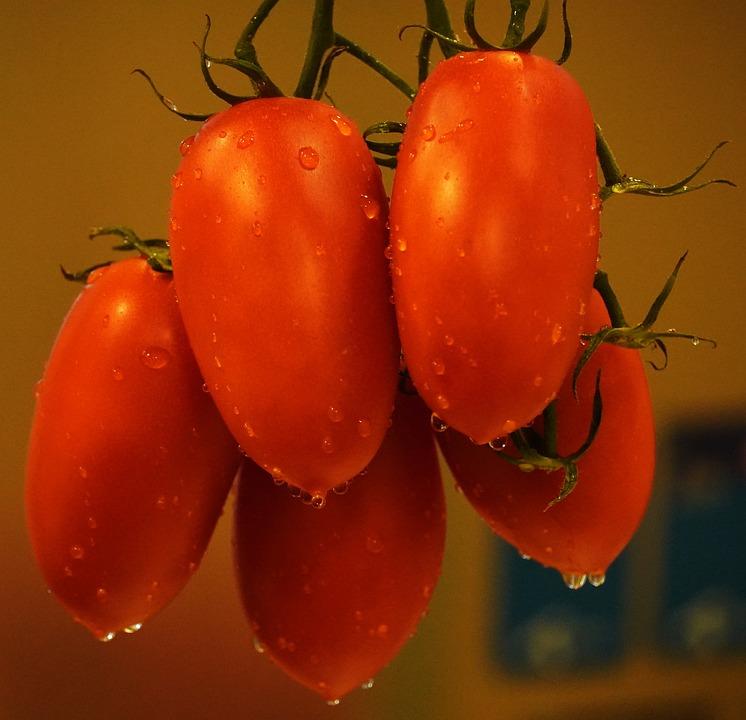 vörös paradicsom rák dysbiosis