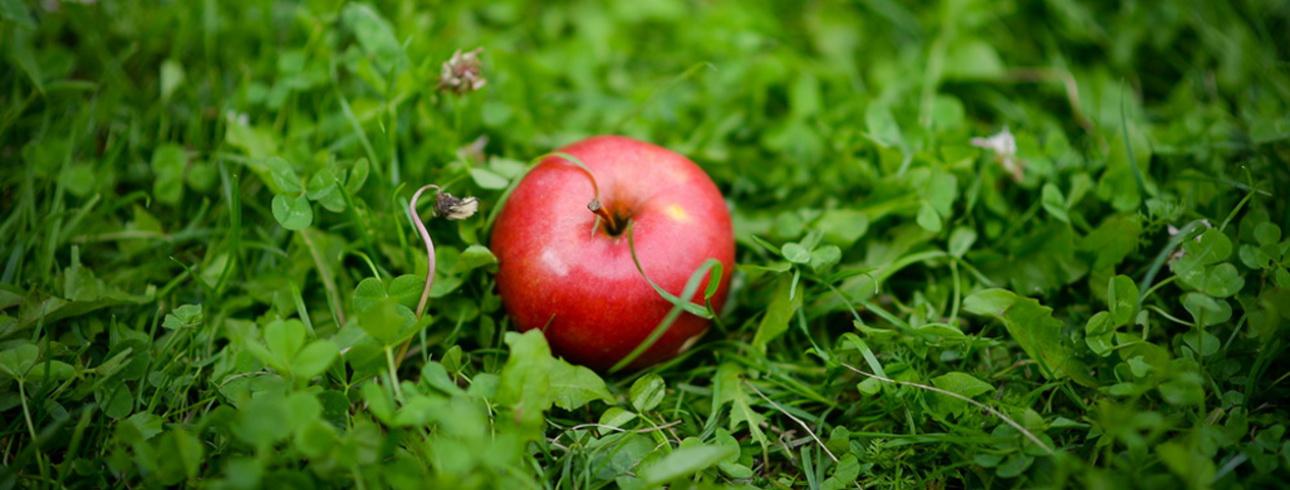 gyümölcslevek a méregtelenítésben gyuri bácsi galandféreg