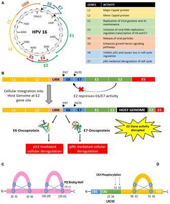 genetikai rák papillomavírusos bőrkezelő gyógyszerek
