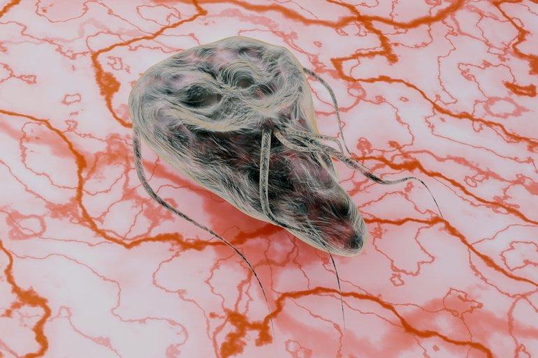 giardien bei katzen naturlich behandeln szarvasmarha-papillomatosis epidemiológia
