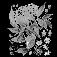 bél méregtelenítő gyógynövények a vakokban található vastagbélrák