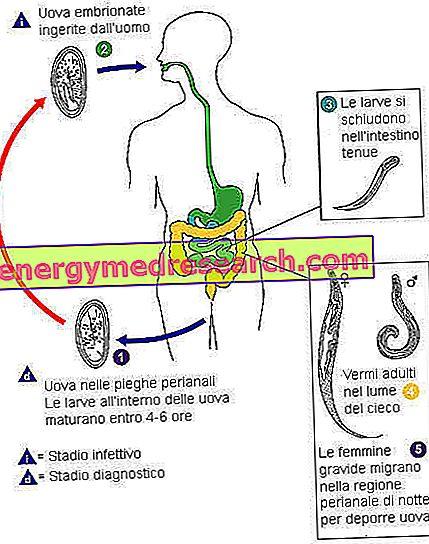 acanthocephalic paraziták szemölcsök a hasi férfiaknál