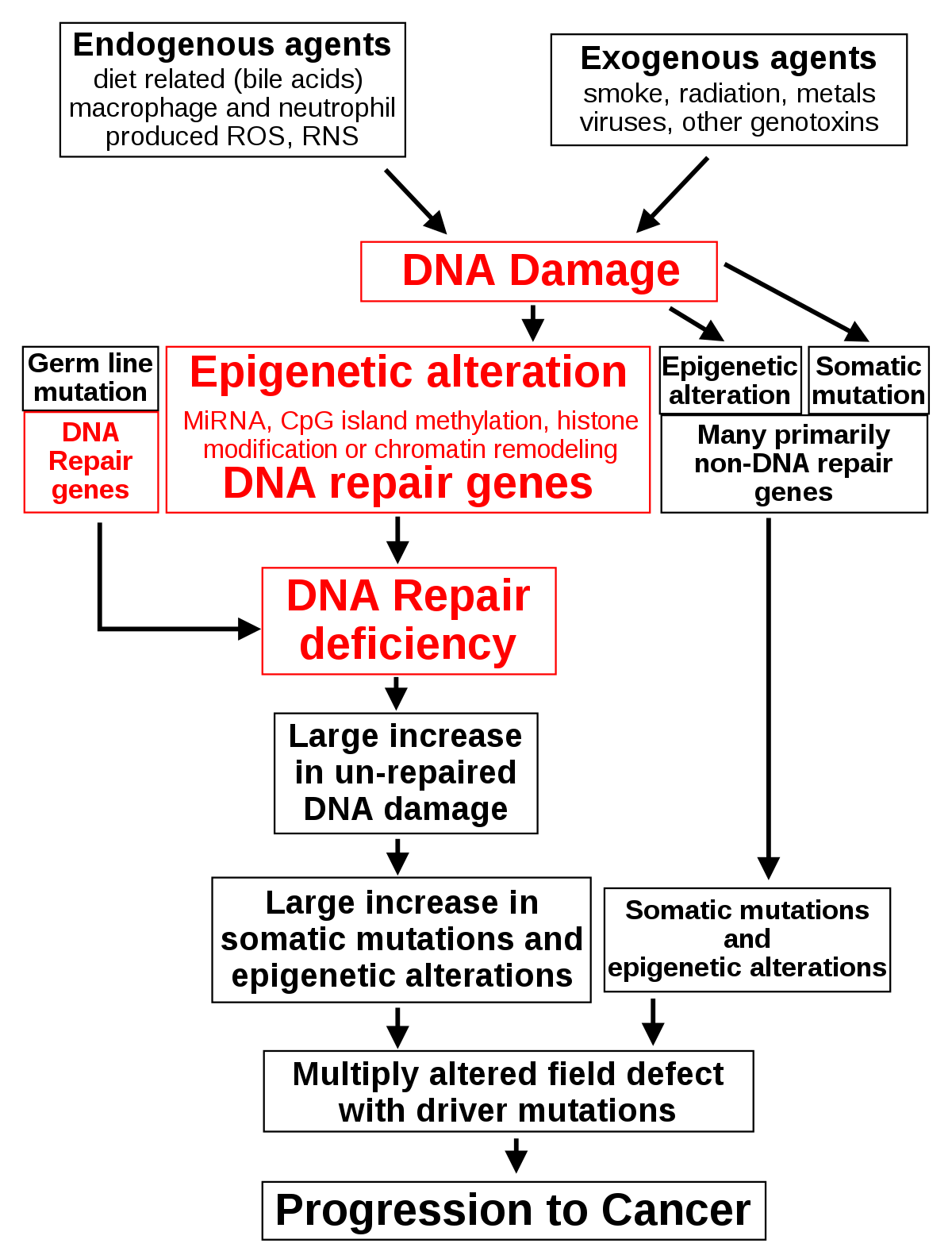 hasnyálmirigyrák genetikai kapcsolat gyógyító időszakban a nemi szemölcsök eltávolítása