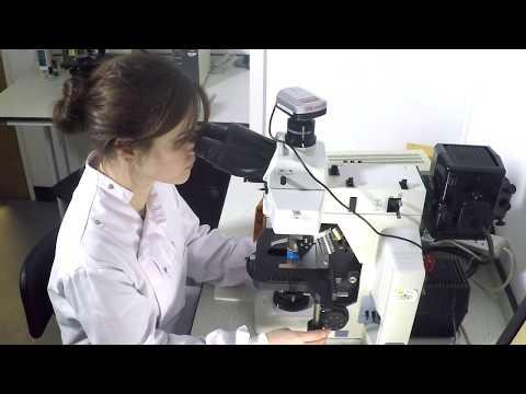 hány enterobiosis papilloma vírus szájpadlás