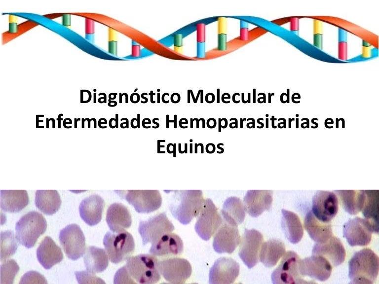 hemoparaziták ppt