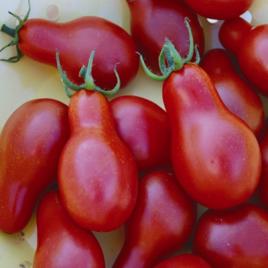 vörös paradicsom puhatestű-parazita az emberi test kezelésében