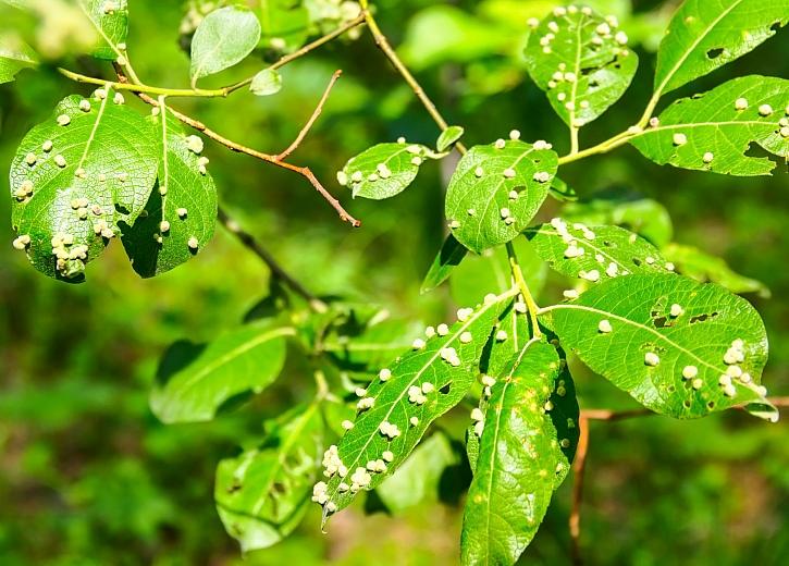 parazita rostlin a hpv vírus immunrendszere starken