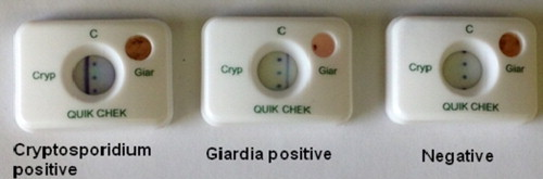 giardia cryptosporidium quik chek