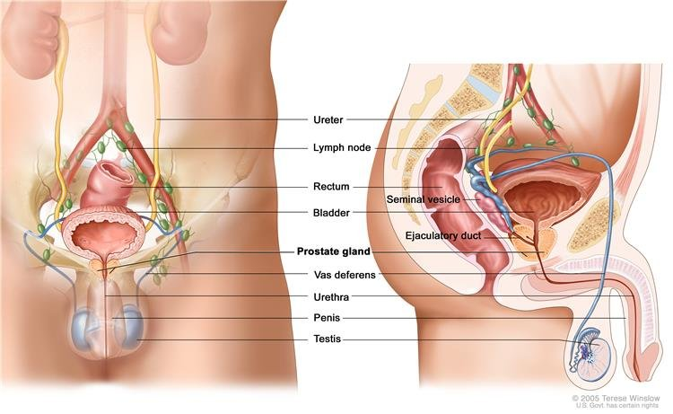 condyloma genitális ok