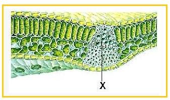 a diphildobothriasis lokalizációja a testben holt gyöngyök