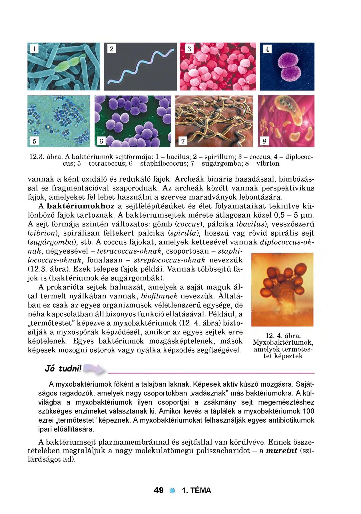 baktériumok 4+ hasüregi rák méheltávolítás után