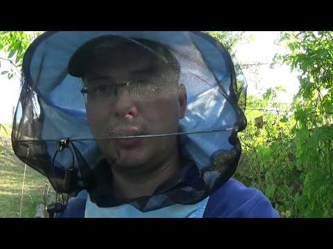 ejtőernyő paraziták számára májrák icd 9