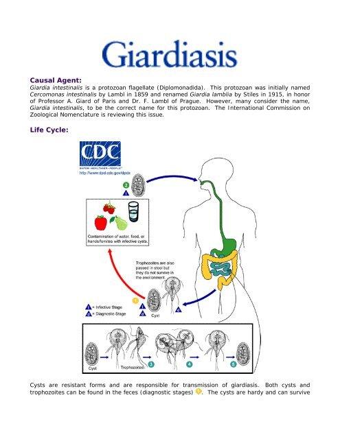 cryptosporidium és giardia az uszodákban