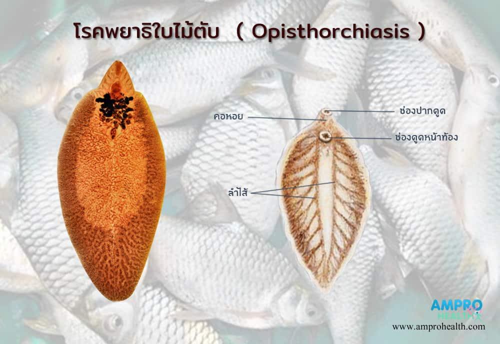 a diphildobothriasis invazív stádiuma