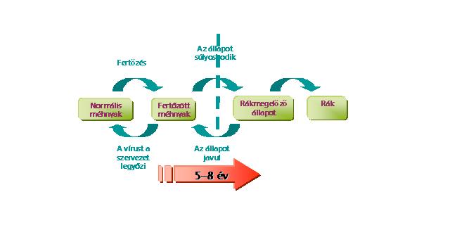 hpv oropharyngealis rák patológiája felvázolja