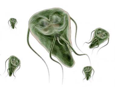 ductalis papilloma mama emberi papillomavírus kimutatásának kockázata