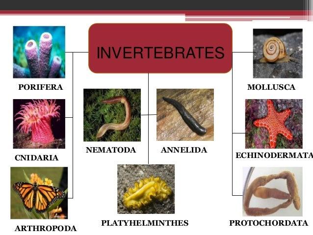szemölcsök genitális kezelése a vény nélkül platyhelminths nem parazita