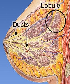 ductalis tumor papilloma