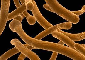 férgek baktériumok