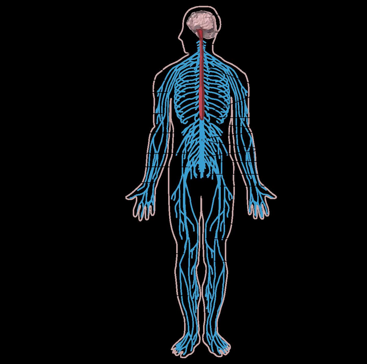 készítmények a férgek eltávolítására az emberi testből hogyan nem lehet condyloma