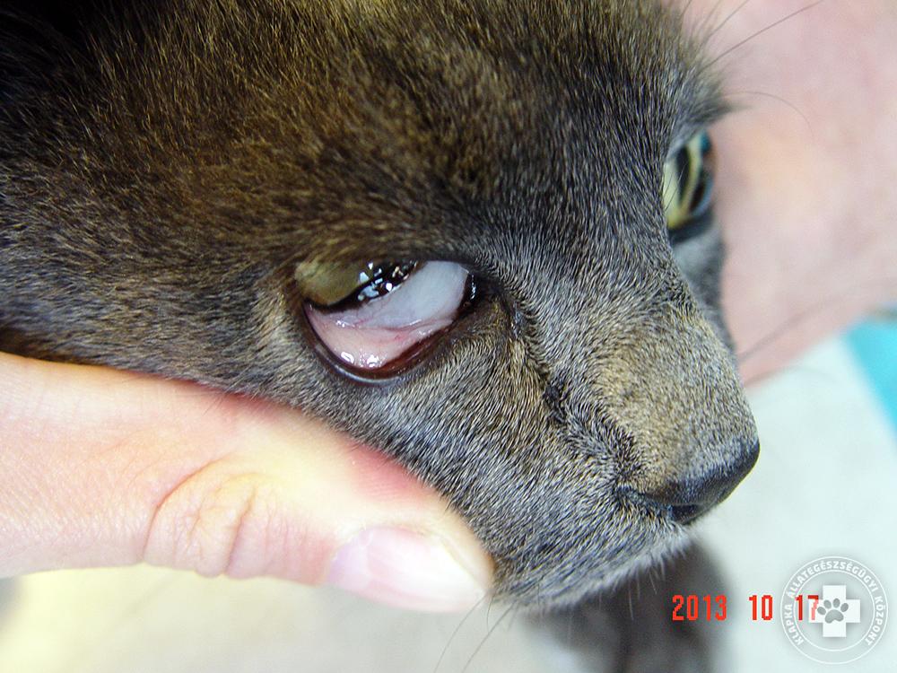 parazita férgek elleni gyógyszerek