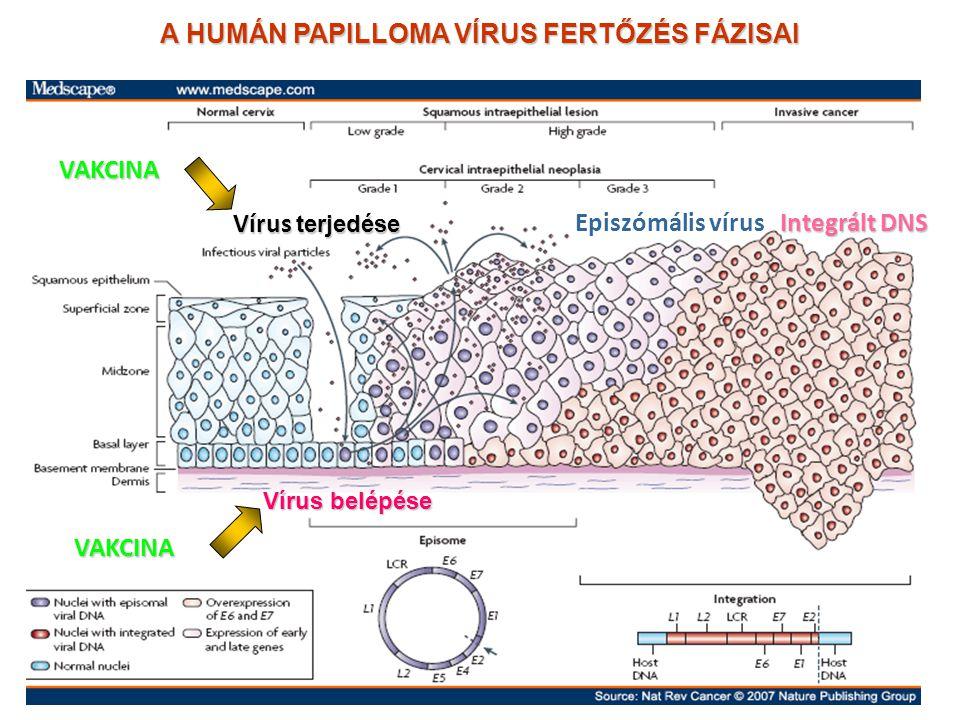 férgek a betegség papillomatosis cutis confluens et reticularis