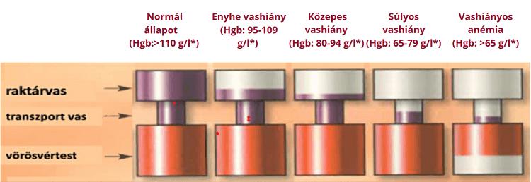 vérszegénység x vashiány szemi helminthiasis