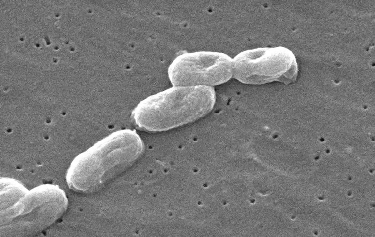 baktériumok 4+ giardien bei katzen naturlich behandeln