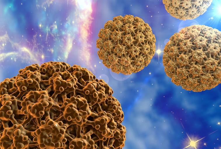 humán papilloma vírus képek