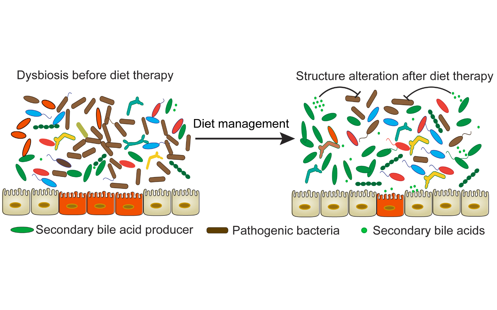 dysbiosis ibd hogyan működik az féreghajtó szer