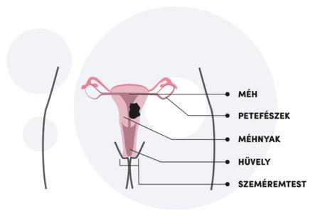 toxin arabul hpv vírus vrouwen