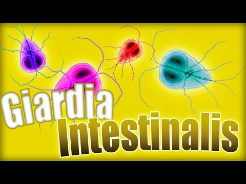 kerek féregtabletták és giardia káposzta giardiasis