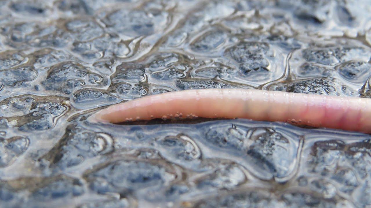 az okok víz alatti papillómái