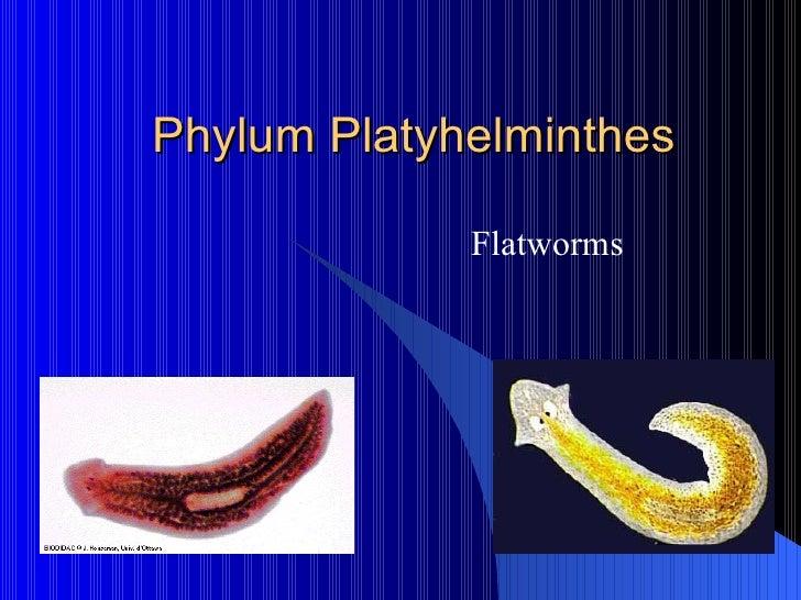 platyhelminthes phylum ppt papillomavírus vírusellenes kezelés